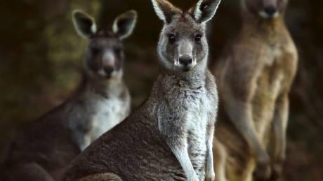 Αυστραλία: Φράχτης μήκους 44χλμ για την προστασία σπάνιων ζώων