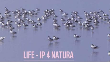 LIFE-IP 4 NATURA: «Επανεκκίνηση» για την προστασία της ελληνικής φύσης