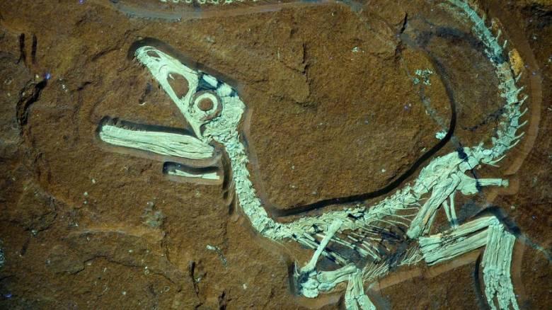 Ελληνοκινεζική συνεργασία για την μελέτη απολιθωμάτων δεινοσαύρων