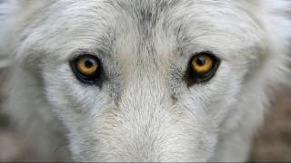 Δεν ήταν λύκος ούτε αρκούδα: Μυστηριώδες πλάσμα προβληματίζει τους ειδικούς