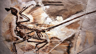 Και οι δεινόσαυροι είχαν πρόβλημα με την… πιτυρίδα
