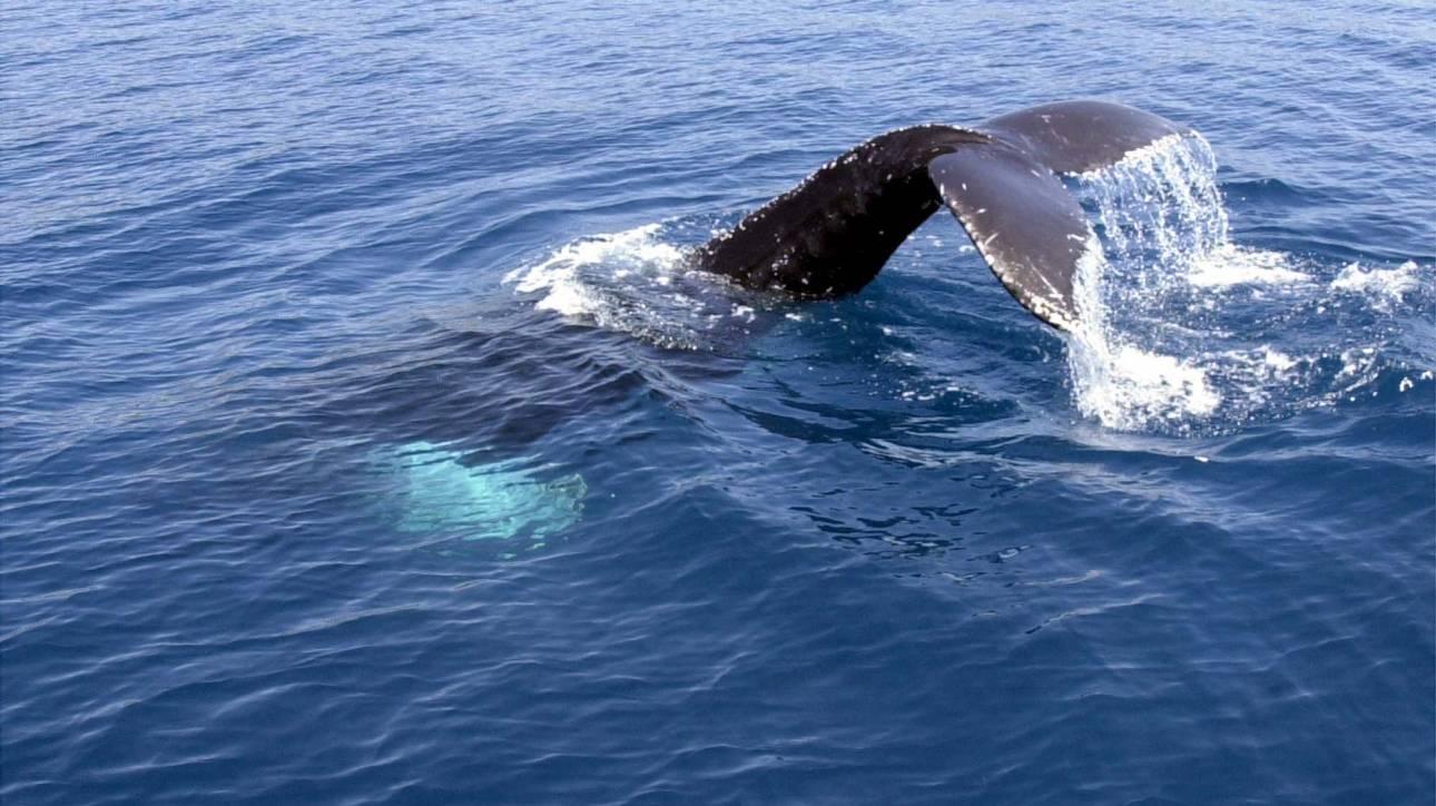 Πώς μία πλαστική σακούλα από τη Θεσσαλονίκη σκότωσε φάλαινα στη Μύκονο;