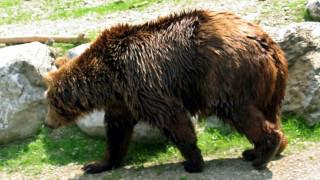Φλώρινα: «Καταφύγιο» σε ακατοίκητο σπίτι βρήκε μια αρκούδα με τα μικρά της