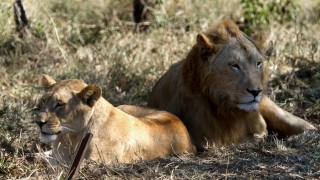 Άγρια ζώα δραπέτευσαν από ζωολογικό κήπο της Γερμανίας