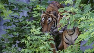 Βρέθηκαν τα άγρια ζώα που το «έσκασαν» από ζωολογικό κήπο της Γερμανίας