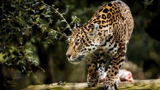 Γερμανία: To «Prison Break» των άγριων ζώων δεν έγινε ποτέ...