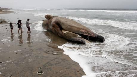 Ταϊλάνδη: Φάλαινα πέθανε καθώς κατάπιε 80 πλαστικές σακούλες