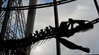 Παγκόσμια Ημέρα Περιβάλλοντος 2018: Τι μας διδάσκει η εξαφάνιση των δεινοσαύρων