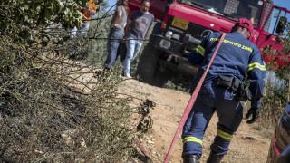 Πυρκαγιές σε δασικές περιοχές της Χαλκιδικής λόγω πτώσης κεραυνών