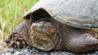 Σάλος στις ΗΠΑ: Καθηγητής τάισε χελώνα με... ένα κουτάβι μπροστά στους μαθητές του