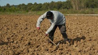 Φύτευε πατάτες στον κήπο του και ανακάλυψε ότι η γυναίκα του είναι δολοφόνος
