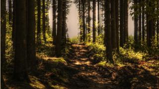 Η ρύπανση πλήττει τους μύκητες που τρέφουν τα δέντρα στην Ευρώπη