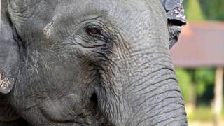 Γερμανία: Ελέφαντας «το έσκασε» από τσίρκο και βγήκε βόλτα σε πολυσύχναστο δρόμο