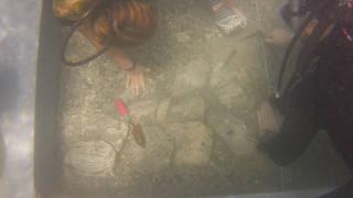 Ινδία: Αρχαιολόγοι ανακάλυψαν πρώτη φορά ιππήλατα άρματα ηλικίας 4.000 χρόνων