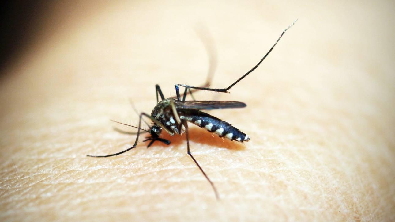Διαβούλευση σχετικά με τις ασθένειες που μεταδίδονται μέσω κουνουπιών από Ευρωπαίους επιστήμονες
