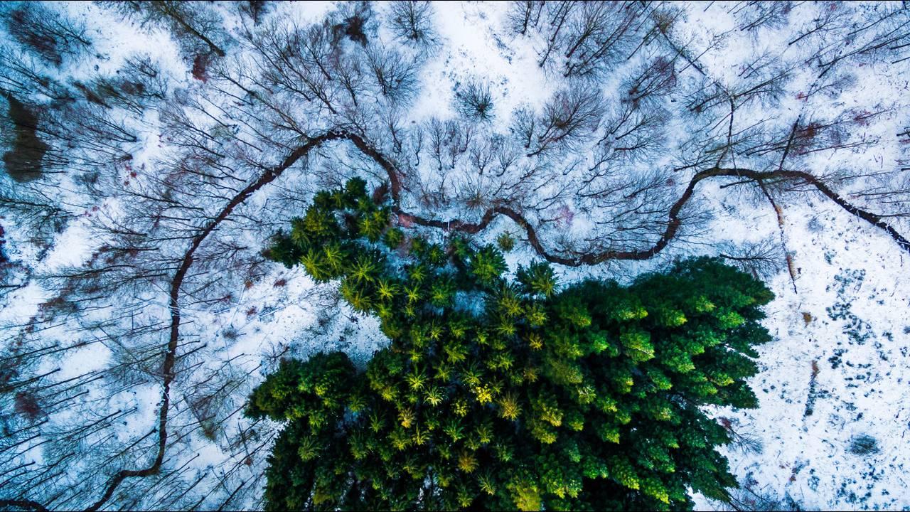 https://cdn.cnngreece.gr/media/news/2018/06/15/134538/photos/snapshot/Kalbyris-forest-Denmark-by-mbernholdt.jpg