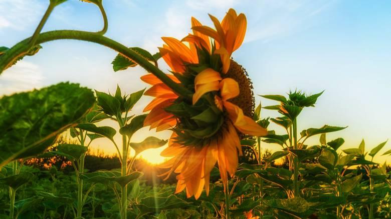 Θερινό ηλιοστάσιο 2018: Σήμερα ξεκινά επίσημα το καλοκαίρι