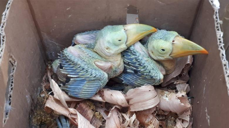 Πύθωνες, κροκόδειλοι και πουλιά κατασχέθηκαν σε επιχείρηση της Interpol