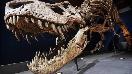 Ο τρομερός Τυραννόσαυρος δεν μπορούσε να… βγάλει γλώσσα