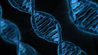 Οι επιστήμονες διαφωνούν για τον αριθμό γονιδίων του ανθρώπου