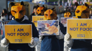Νότια Κορέα: Παράνομη πλέον η σφαγή σκύλων για το κρέας τους