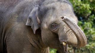 Ινδία: Το ξεχωριστό «ευχαριστώ» για τη διάσωση ενός μικρού ελέφαντα