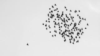 Ρομποτικά πουλιά - κατάσκοποι στους ουρανούς της Κίνας