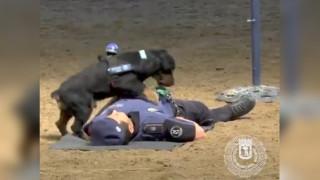 Σκύλος της αστυνομίας κάνει... καρδιακές μαλάξεις και γίνεται viral!