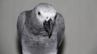 Ο παπαγάλος που προτιμά να… οδηγεί παρά να πετάει