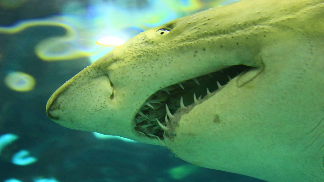 Λευκός καρχαρίας 5 μέτρων στις Βαλεαρίδες Νήσους
