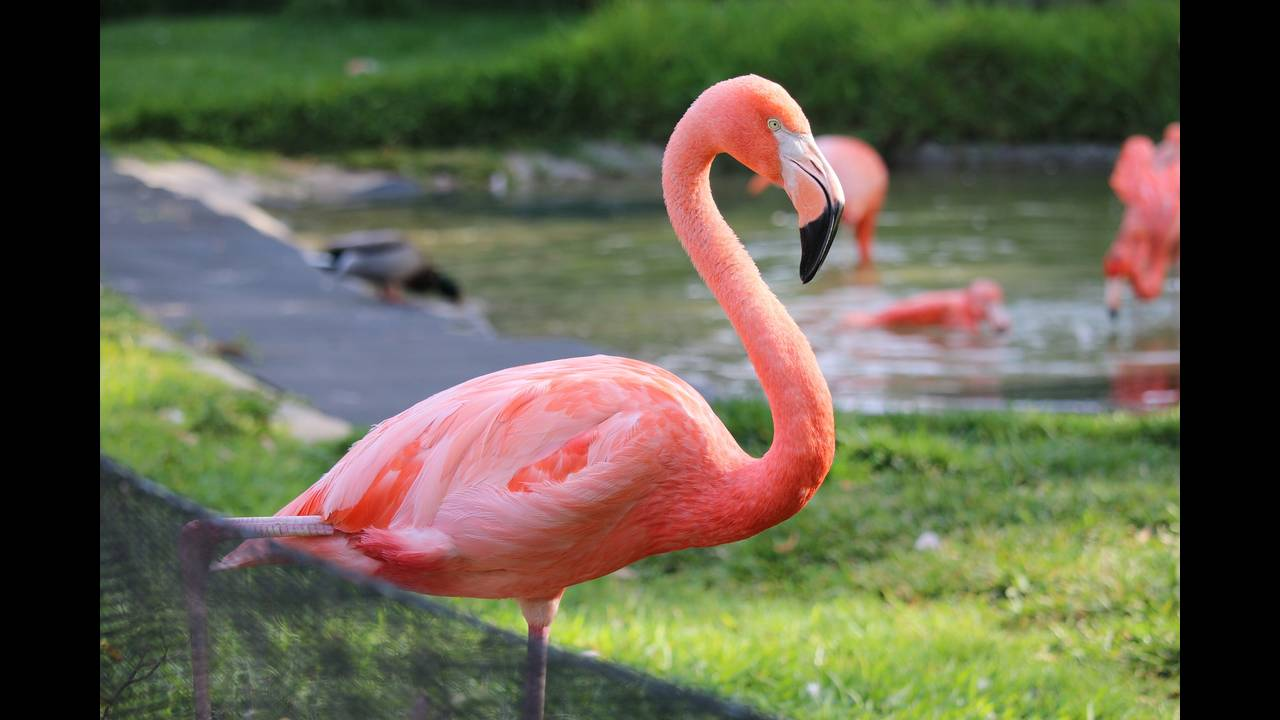 https://cdn.cnngreece.gr/media/news/2018/06/30/136793/photos/snapshot/flamingo-1792211_1920.jpg