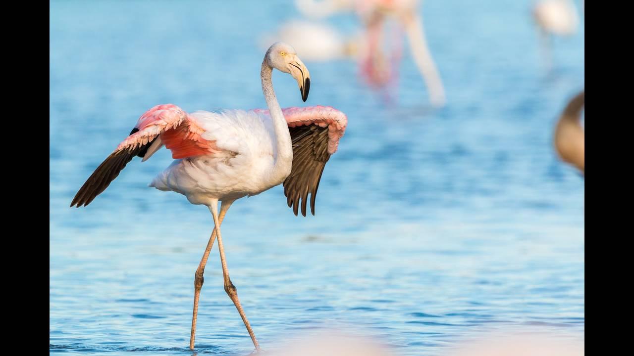 https://cdn.cnngreece.gr/media/news/2018/06/30/136793/photos/snapshot/flamingo-2591522_1920.jpg