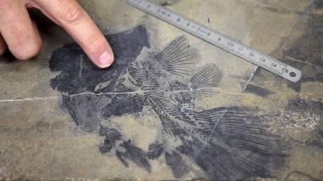 Κλιματική αλλαγή είχαν προκαλέσει τα πρώτα ζώα στον πλανήτη, 500 εκατ. χρόνια πριν