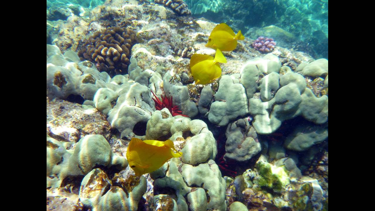 https://cdn.cnngreece.gr/media/news/2018/07/03/137151/photos/snapshot/coral-91664_1920.jpg