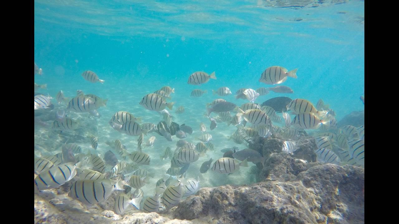 https://cdn.cnngreece.gr/media/news/2018/07/03/137151/photos/snapshot/underwater-fish-1686604_1920.jpg