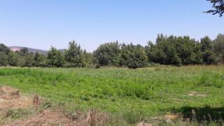 Φυτεία με πάνω από 10.000 δενδρύλλια κάνναβης στην Καρδίτσα