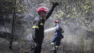 Υπό μερικό έλεγχο η πυρκαγιά στην περιοχή Βατήσι Καρύστου