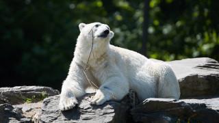 Πολική αρκούδα σκότωσε πατέρα που προσπάθησε να σώσει τις κόρες του