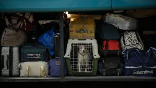 Καβάλα: Πρόστιμο σε ιδιοκτήτη σκύλου επειδή τον παράτησε κλεισμένο στο αυτοκίνητο