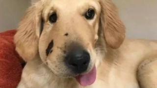 Ο ήρωάς της: Το σκυλί που έσωσε την ιδιοκτήτριά του από κροταλία