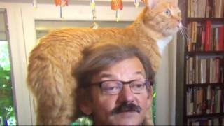 Επίθεση… τρυφερότητας από γάτο σε ζωντανή σύνδεση