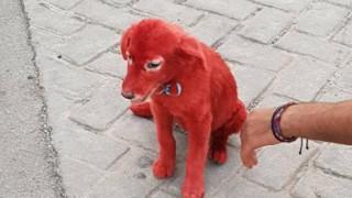 Νέο περιστατικό κακοποίησης ζώου: Βρέθηκε κουτάβι βαμμένο με κόκκινη μπογιά