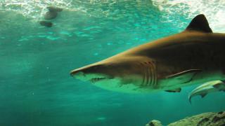 Αυτά πρέπει να κάνετε αν σας επιτεθεί... καρχαρίας!