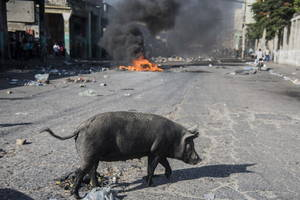 Ένας χοίρος διασχίζει δρόμο, ενώ λίγο πιο πέρα καίγονται λάστιχα στο οδόστρωμα, στο πλαίσιο των διαμαρτυριών των τελευταίων τριών ημερών λόγω της αύξησης των τιμών των καυσίμων, στο Port-au-Prince, Αϊτή, 09 Ιουλίου 2018.