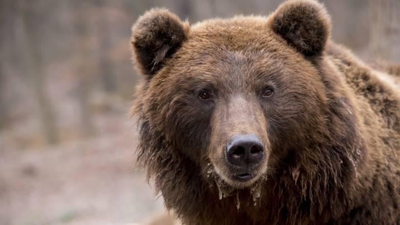 Viral έγινε η προσπάθεια αρκούδας να μπει σε αυτοκίνητο