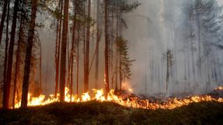 Συναγερμός στη Σουηδία: Δεκάδες μέτωπα πυρκαγιών στα δάση της