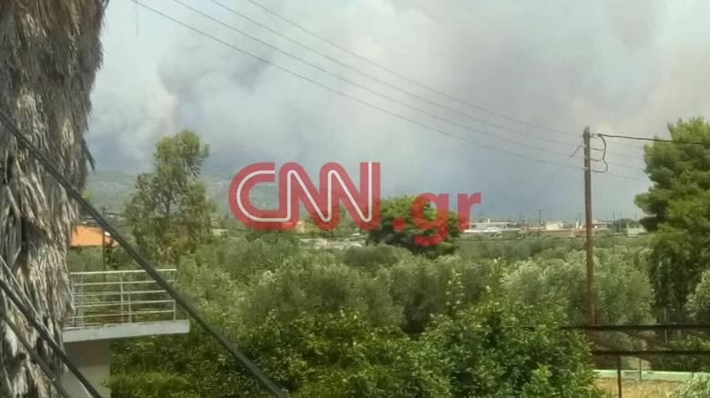 Φωτιά Κινέτα: Βίντεο από το σημείο
