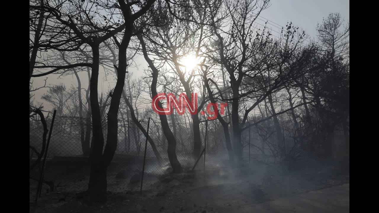 https://cdn.cnngreece.gr/media/news/2018/07/23/139857/photos/snapshot/4314355376_LP2_3796.jpg