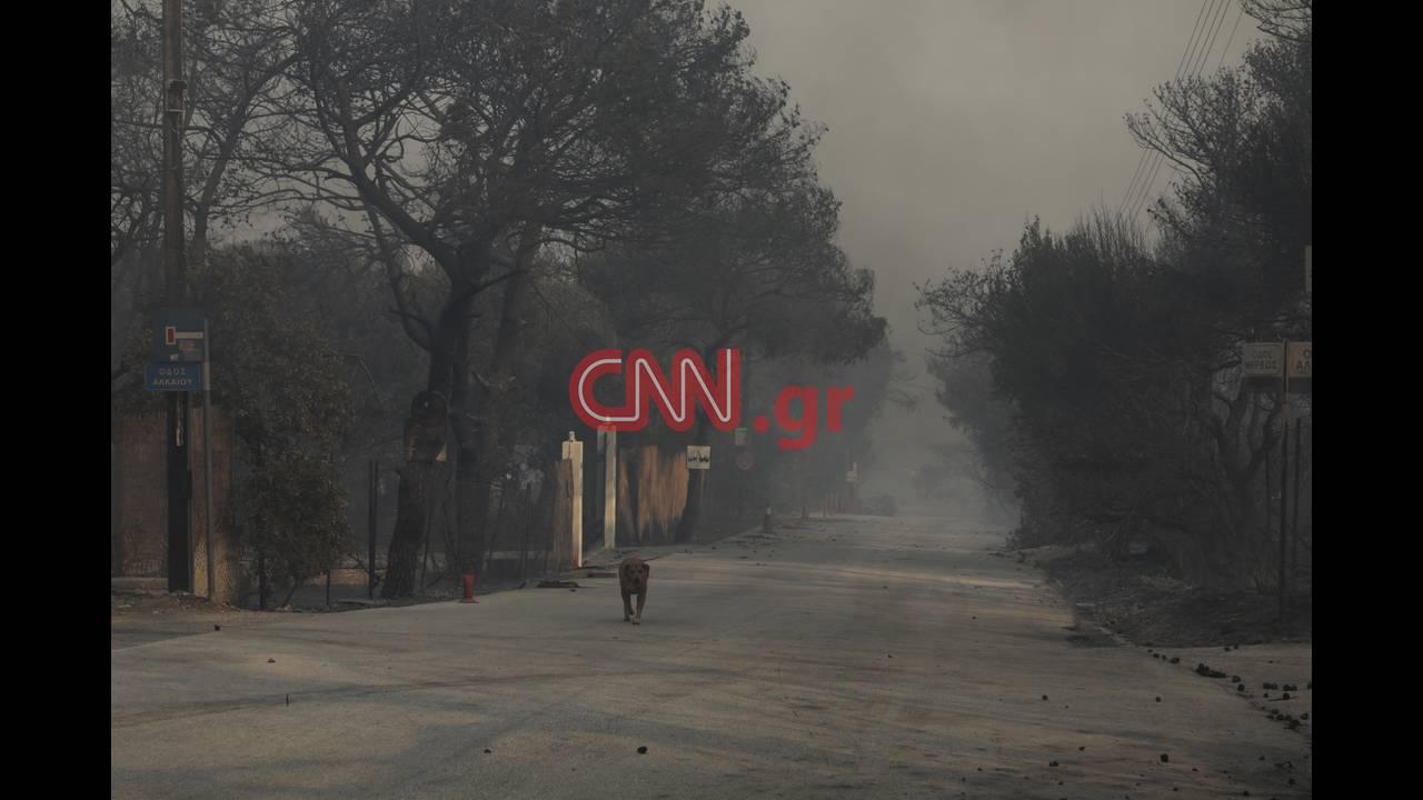 https://cdn.cnngreece.gr/media/news/2018/07/23/139876/photos/snapshot/4314355376_LP2_3756.jpg