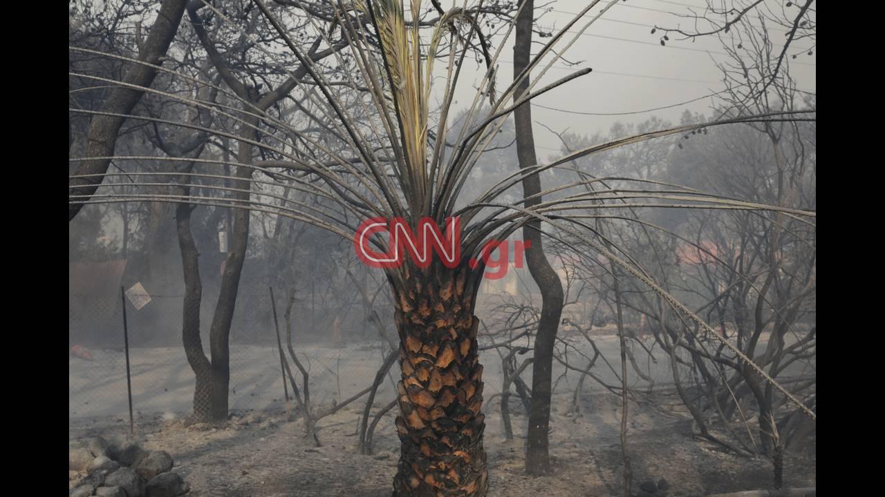 https://cdn.cnngreece.gr/media/news/2018/07/23/139876/photos/snapshot/4314355376_LP2_3789.jpg